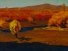 Gansukh E. - Tuul river - Oil on canvas - 40x80 cm